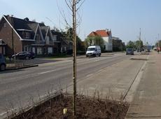 Aanplanting bomen