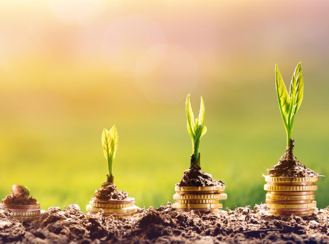 Geld planten groeien